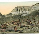 ADAMANA AZ PETRIFIED FOREST HAND COLORED POSTCARD