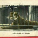 LINCOLN PARK ZOO CHICAGO ILLINOIS TIGER 1909 POSTCARD
