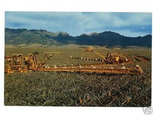 PINEAPPLE HARVESTING IN HAWAII HELBIG  POSTCARD