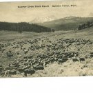 GALLATIN VALLEY MT QUARTER CIRCLE STOCK RANCH POSTCARD