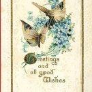 BUTTERFLIES BUTTERFLY GREETINGS 1911 POSTCARD