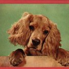 COCKER SPANIEL PUPPY DOG   CUTE POSTCARD
