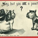 DOG CAT PEACH FLC ARTIST SIGNED MOSS 1909  POSTCARD