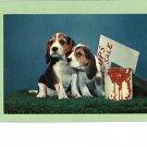 PUPPIES BEAGLES PUPS FOR SALE  POSTCARD 1957