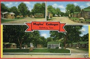 GATLINBURG TENNESSEE MAPLES' COTTAGES 1954  POSTCARD