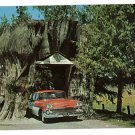 HIGHWAY 99 WASHINGTON CEDAR STUMP OLD CHEVY  POSTCARD