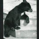 RPPC BLACK BEAR ON STEPS  A CUMMINGS PHOTO RP POSTCARD
