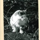 RPPC CAT OUTSIDE IN WEEDS A CUMMINGS PHOTO RP POSTCARD