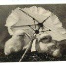 EASTER CHICKS W/ PARASOL 1906 BULLARD SHEAHAN POSTCARD