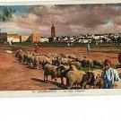 Casablanca La Ville indigene Vintage Postcard