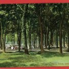 CEDAR POINT OHIO OH PICNIC GROVE 1909  POSTCARD