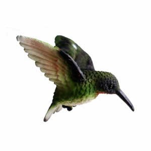 Window Fly Thru - Ruby Throated Hummingbird