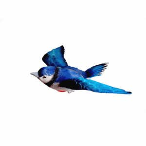 Window Fly Thru - Blue Jay