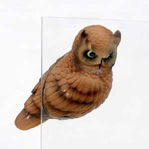 Window Fly Thru - Horned Owl
