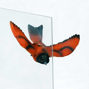 Window Fly Thru - Orange Finch