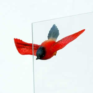 Window Fly Thru - Rainbow Sunbird