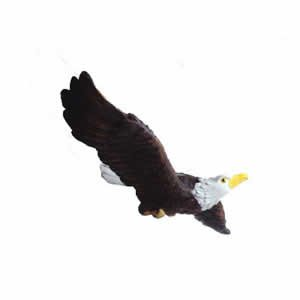 Window Fly Thru - Bald Eagle