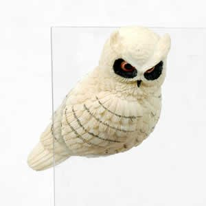 Window Fly Thru - Snow Owl