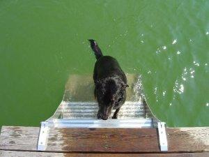 Dog Pet Ladder Step Staircase Design Pro-Step ProStep