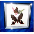 Vintage.... Silver Framed Wall Hanging with REAL Butterflies