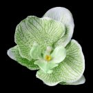 Green Orchid Hair Flower Clip 9945