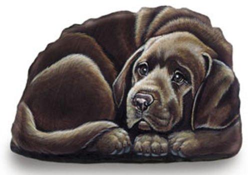 Chocolate Lab Pupper Weight