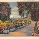 Flower Borddered Walk In California  (A19) 1937