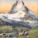 Matterhorn - Sheep, Switzerland (A116)