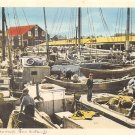 Yarmouth Fishing Fleet, Nova Scotia, Canada (A272)
