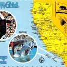 Sea World, San Diego California - Map Postcard (A395)