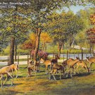 Bridgeport, Conn, CT Postcard - Beardsley Park Deer Park 1942 (A616)