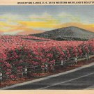 U.S. Route 40, Md Springtime Postcard (B300) Maryland