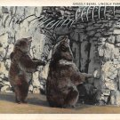 Chicago, Ill Postcard Lincoln Park Zoon Grizzley Bear (B3) IL, Illinois