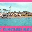 Chincoteague Island, VA - Continental Postcard (B379)