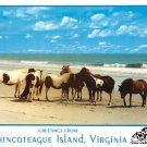 Chincoteague Island, VA - Continental Postcard (B358)