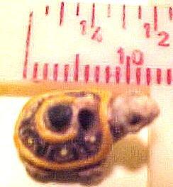 Turtle 4 Teeney Pottery Beads