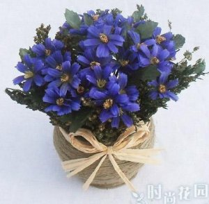 10 PCS,Christmas simulation silk flower/artificial flower,Beauty chrysanthemum including the pot