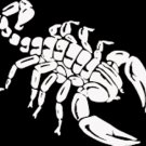 "(SCR 2) 6"" white vinyl Tribal Scorpion die cut window laptop decal sticker."