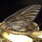 Green Drake Parachute Dry Fly Twelve Hook Size 12 Flies