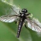 Black Gnat Dry Fly Fishing Flies - Twelve Size 16 Flies