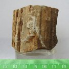 Arizona Petrified Wood Mineral Specimen 127 grams