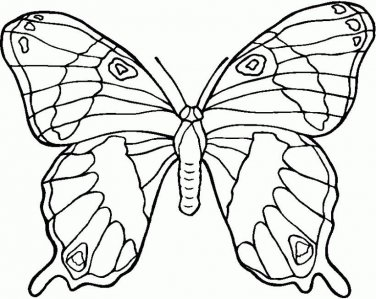 Butterflies Printable Coloring eBook on CD 107 Pages