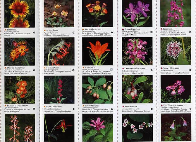WILDFLOWER Guide eBook on CD Printable