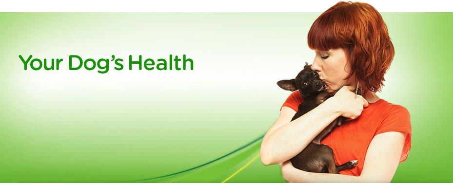 Dog Care Health Collection 40 eBooks on CD Printable