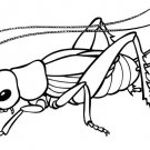 Bugs Printable Coloring eBook 40 Pages on a CD