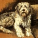 Reverie (Bearded Collie)