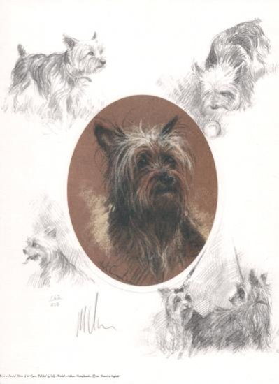 Oval Yorkshire Terrier