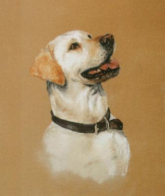 'Yellow Lab Study'