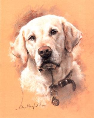 'Yellow Lab'