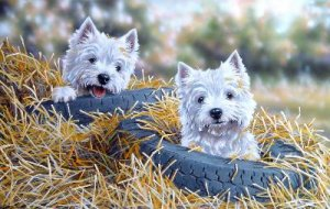 'Two Tyred'